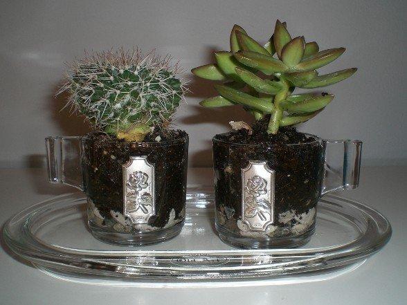 Come dare quel tocco in pi alle tue piccole piante for Piccole piantine