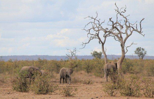 parco-kruger-sudafrica