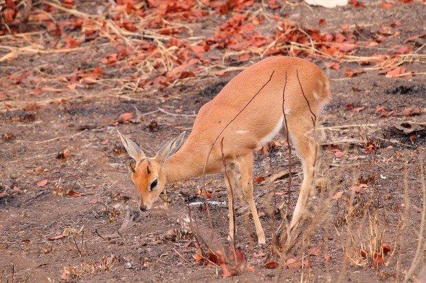 sudafrica-kruger