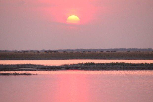Animali all'Orizzonte - Tramonto sul Makgadikgadi Pan