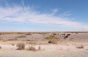 deserto-kalahari-botswana