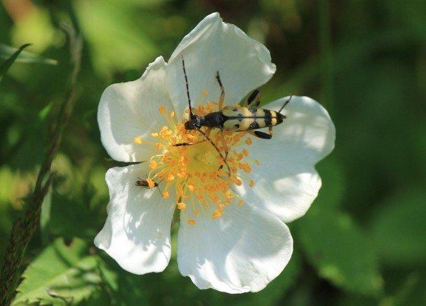 fiore-col-campeggia