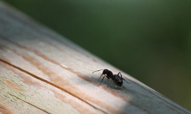 formica-col-campeggia