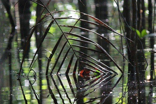 foresta-amazzonica-2
