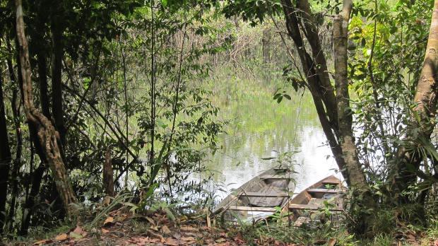 foresta-amazzonica-6