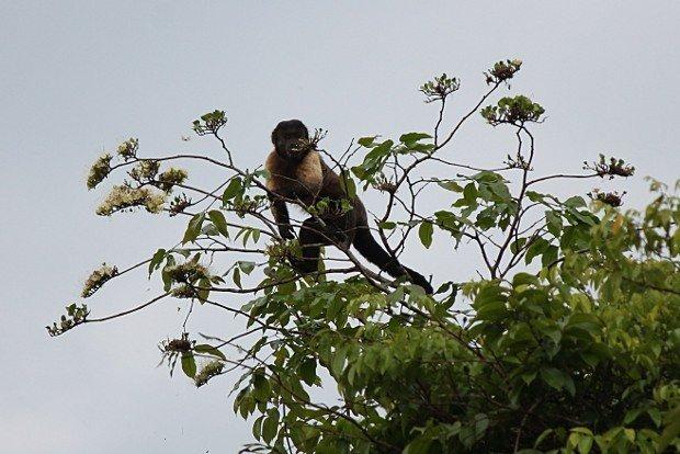 viaggio-in-amazzonia-animali-11
