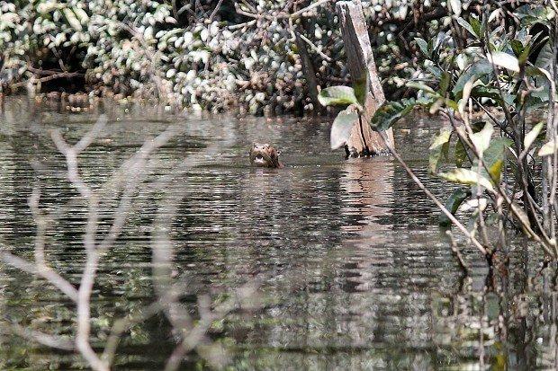 viaggio-in-amazzonia-animali-14