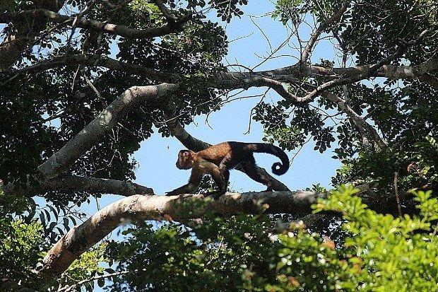 viaggio-in-amazzonia-animali-16