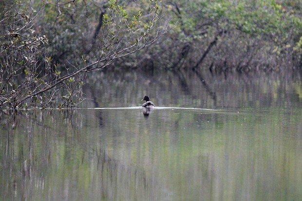 viaggio-in-amazzonia-animali-17