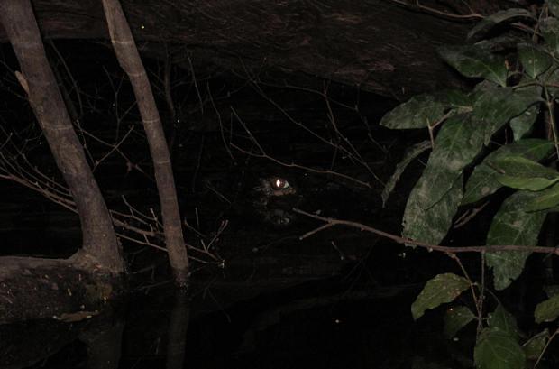 viaggio-in-amazzonia-caimano
