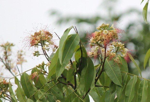 viaggio-in-amazzonia-fiori