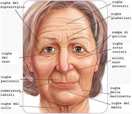mappa-rughe-viso-crema-antirughe-efficace