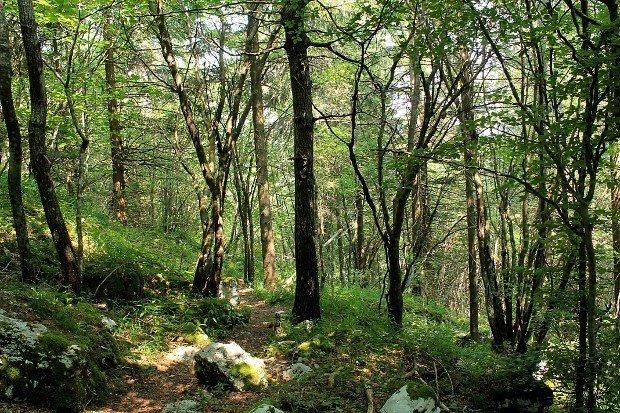 bosco-escursione-monte-cengio