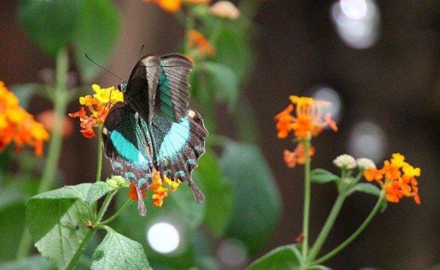 casa-delle-farfalle (1)