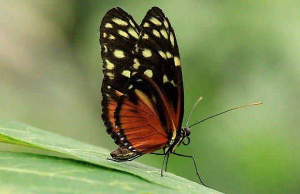 casa-delle-farfalle (11)