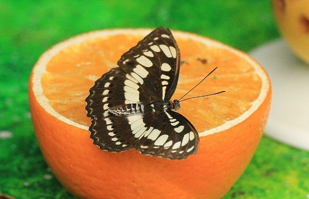 casa-delle-farfalle (12)