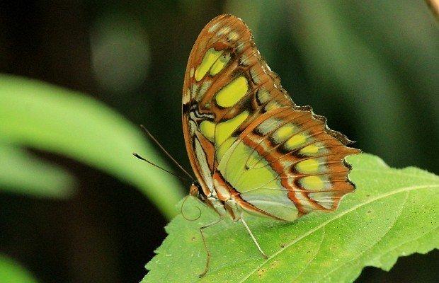 casa-delle-farfalle (14)
