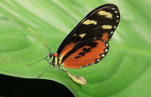 casa-delle-farfalle (15)