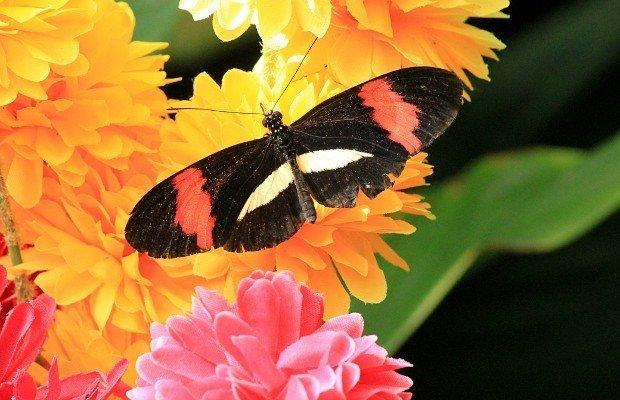 casa-delle-farfalle (16)