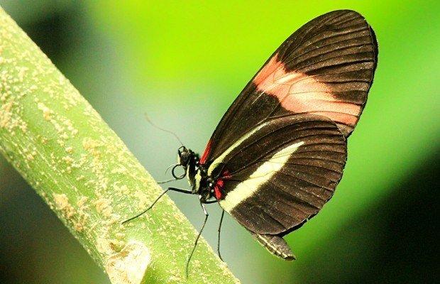 casa-delle-farfalle (17)