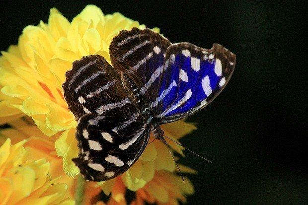 casa-delle-farfalle (18)
