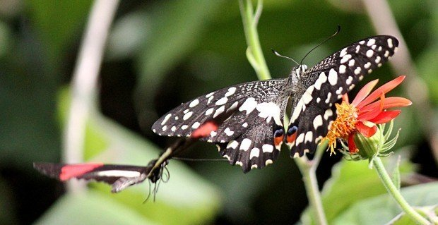 casa-delle-farfalle (19)