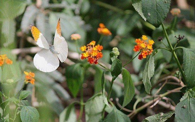 casa-delle-farfalle (2)