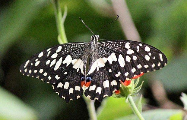 casa-delle-farfalle (20)