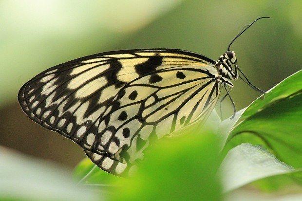 casa-delle-farfalle (21)