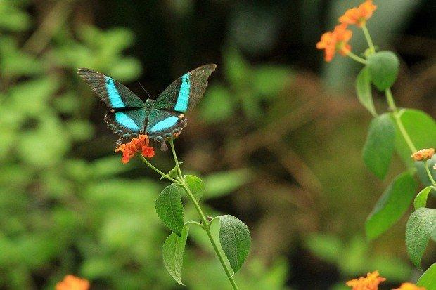 casa-delle-farfalle (22)