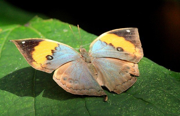 casa-delle-farfalle (3)