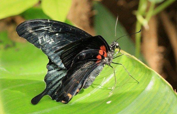 casa-delle-farfalle (4)