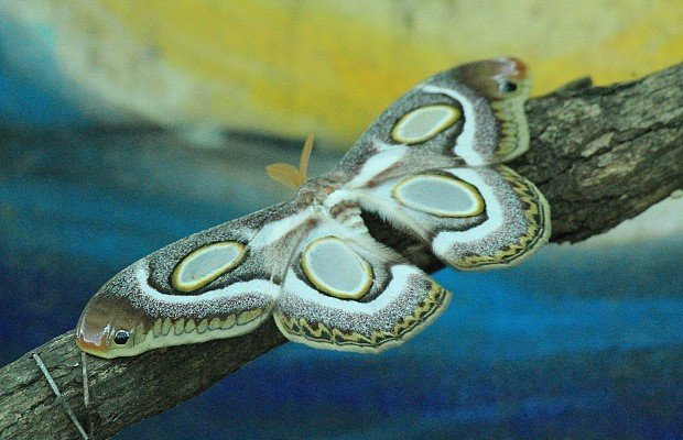 casa-delle-farfalle (6)