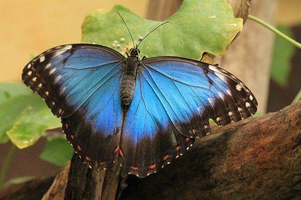 casa-delle-farfalle (7)