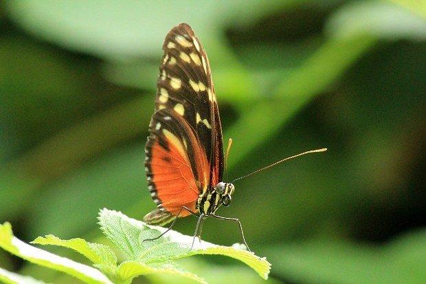 casa-delle-farfalle (8)