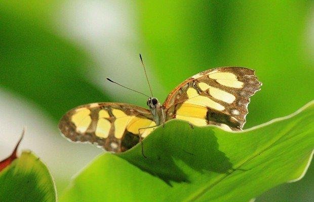 casa-delle-farfalle (9)